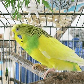 鳥 トリ ペット