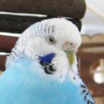 鳥山ニーナ管理者 さんのプロフィール写真