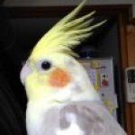 荊子(けいこ) さんのプロフィール写真