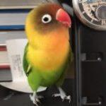 Chobi さんのプロフィール写真