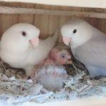 鳥がすき さんのプロフィール写真